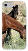 Wild Horse Mama And Her Baby IPhone Case
