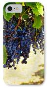 Wine Grapes IPhone Case by Kristina Deane