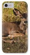 Young Mule Deer IPhone Case