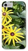 Flower Rudbeckia Fulgida In Full IPhone Case by Ted Kinsman