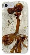 Furbelows Seaweed, Saccorhiza Polyschides IPhone Case by Dr Keith Wheeler