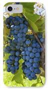 Grapes On A Vine Sutton Junction Quebec IPhone Case by David Chapman