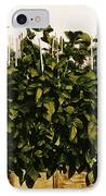 Photoperiodicity In Soybean Plants IPhone Case by Science Source