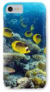Red Sea Raccoon Butterflyfish IPhone Case by Georgette Douwma