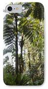 Bromeliad And Tree Ferns  IPhone Case by Cyril Ruoso