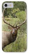 Bull Elk Eyes IPhone Case by James BO  Insogna