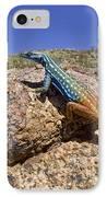 Cape Flat Lizard  South Africa IPhone Case by Piotr Naskrecki