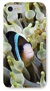 Clarke's Anemonefish IPhone Case by Georgette Douwma