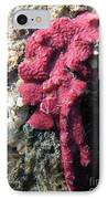 Close-up Of Live Sponge IPhone Case by Ted Kinsman