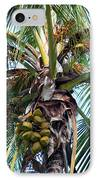 Coconut Palm Inflorescence IPhone Case by Karon Melillo DeVega