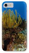 Colony Of Crinoids, Papua New Guinea IPhone Case by Steve Jones