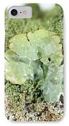 Common Greenshield Lichen IPhone Case by Ted Kinsman