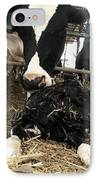 Cow Licking Her Calf IPhone Case by Photostock-israel