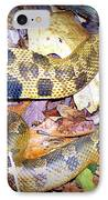 Eastern Hognose Snake IPhone Case by Kathy  White