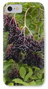 Elderberries (sambucus Nigra) IPhone Case