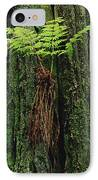 Epiphytic Fern Growing On Redwood IPhone Case