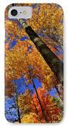 Fall Maple Trees IPhone Case by Elena Elisseeva