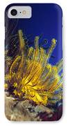 Featherstars On Coral IPhone Case
