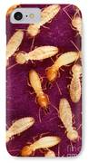 Formosan Termites IPhone Case by Science Source