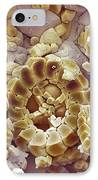 Fossil Debris In Chalk, Sem IPhone Case