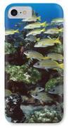 Grunt School Along Coral Reef Cocos IPhone Case by Flip Nicklin