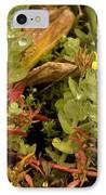 Hampshire Purslane (ludwigia Palustris) IPhone Case by Bob Gibbons