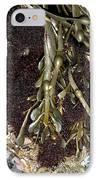 Knotted Wrack (ascophyllum Nodosum) IPhone Case