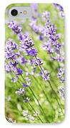Lavender In Sunshine IPhone Case
