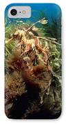 Leafy Sea Dragon IPhone Case by Peter Scoones