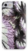 Leaves IPhone Case by Ann Powell
