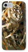 Oak Spider And Prey IPhone Case by Paul Harcourt Davies
