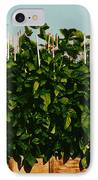 Photoperiodicity In Soybean Plants IPhone Case