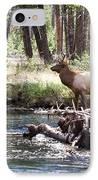 Rocky Mountain Elk IPhone Case by Cindy Singleton