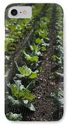 Rows Of Cabbage IPhone Case