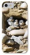Sand Martins IPhone Case