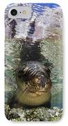Sea Lion Portrait, Los Islotes, La Paz IPhone Case by Todd Winner