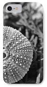 Sea Urchin On Seaweed IPhone Case by David Rucker