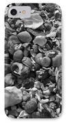 Shells Iv IPhone Case