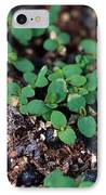 St. Johns Wort IPhone Case by Science Source