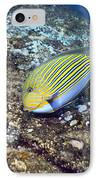 Striped Surgeonfish IPhone Case by Georgette Douwma