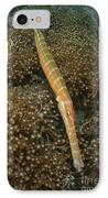 Trumpet Fish, Lembeh Strait, Bitung IPhone Case by Mathieu Meur