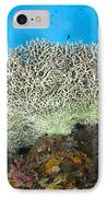 Underside Of A Table Coral, Papua New IPhone Case by Steve Jones