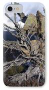 Uprooted Scot's Pine Tree IPhone Case