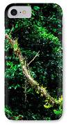 Bromeliads El Yunque National Forest IPhone Case by Thomas R Fletcher