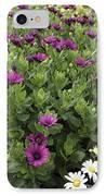 Osteospermum Flowers IPhone Case by Erin Paul Donovan
