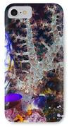 Sea Squirts IPhone Case by Georgette Douwma