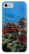 A School Of Orange Basslets IPhone Case by Terry Moore