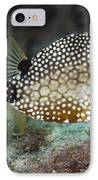 A Spotted Trunkfish, Key Largo, Florida IPhone Case by Terry Moore
