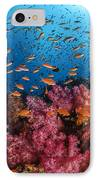 Anthias Fish And Soft Corals, Fiji IPhone Case by Todd Winner