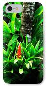 Bromeliads El Yunque National Forest IPhone Case
